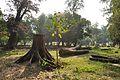 Acharya Jagadish Chandra Bose Indian Botanic Garden - Howrah 2011-01-08 9760.JPG