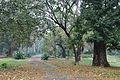 Acharya Jagadish Chandra Bose Indian Botanic Garden - Howrah 2011-02-20 1539.JPG