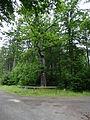 Adlereiche, Naturdenkmal im Landkreis Harz.JPG