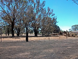 2009–10 Australian bushfire season - A field burnt during the Gregadoo bushfire