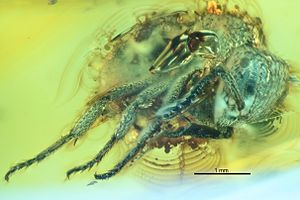 1868 in paleontology - Myrmica duisburgi