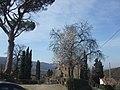 Albero fiorito a Polvano di sopra - panoramio.jpg