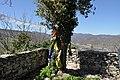 Albero sul torrione.jpg