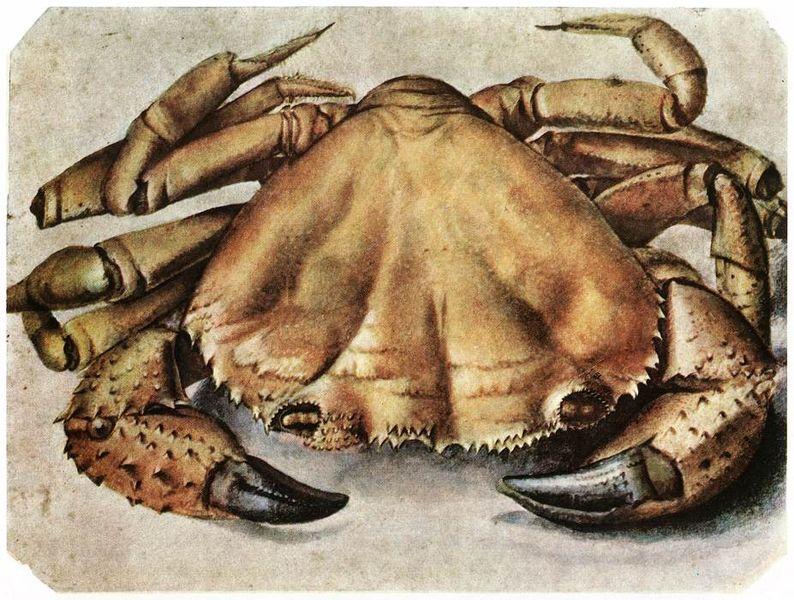 File:Albrecht Dürer 108.jpg