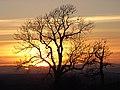 Albyfield sunset - geograph.org.uk - 379739.jpg