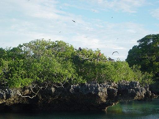 Aldabra Atoll-108987