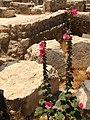 Aleppo citadel (2600122371).jpg