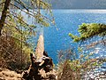 Along Spruce Trail (29757503775).jpg