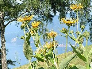 Giardino Botanico Alpinia - Giardino Botanico Alpinia