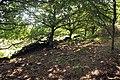 Altar Stones and Blacksmith's Field - geograph.org.uk - 1458205.jpg