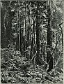 Am Tendaguru - Leben und Wirken einer deutschen Forschungsexpedition zur Ausgrabung vorweltlicher Riesensaurier in Deutsch-Ostafrika (1912) (17977601570).jpg