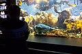 Angler fish in aquarium.jpg