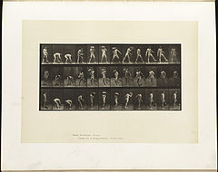 Animal locomotion. Plate 317 (Boston Public Library).jpg