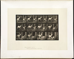 Animal locomotion. Plate 686 (Boston Public Library).jpg