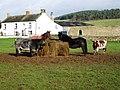 Animal stock feeding at East Holme House - geograph.org.uk - 1592651.jpg