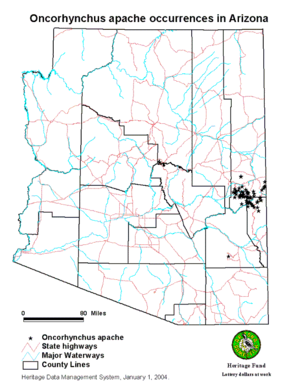 Apache trout - Map showing Apache Trout occurrences in Arizona