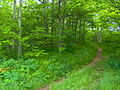 Appalachian-trail-silers-bald-w1.jpg