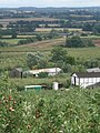 Apple orchards at Putley - geograph.org.uk - 506763.jpg