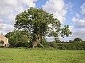 Ash Tree, Haighton - geograph.org.uk - 538834.jpg