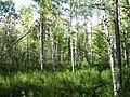 Asinovsky District, Tomsk Oblast, Russia - panoramio (114).jpg