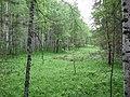 Asinovsky District, Tomsk Oblast, Russia - panoramio (181).jpg