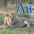 Aslan için A.jpg