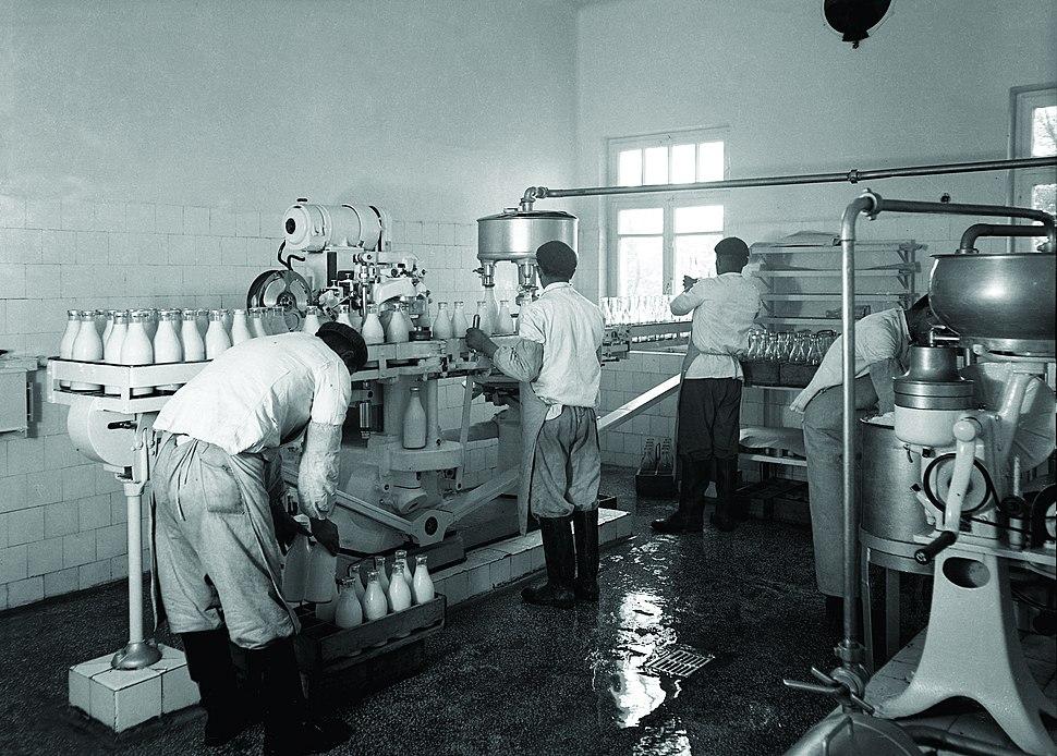 Atatürk Forest Farm, Pasteurized Milk Factory, workers, 1939 (16851408511)