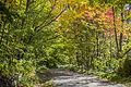 Au bonheur de l'automne au parc Mont-Royal (15341601049).jpg
