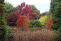 Autumn Colours @ Hillier Gardens (2953706135).jpg