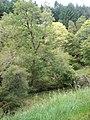 Autumn Colours Starting in Allt More gorge - geograph.org.uk - 987882.jpg