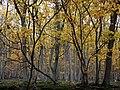 Autumn Leaves in Eifel National Park.jpg