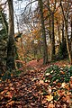 Autumn Path - panoramio.jpg