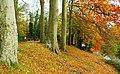Autumn at Huntly Wood near Banbridge (1) - geograph.org.uk - 1046064.jpg
