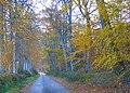 Autumn colour near Munlochy - geograph.org.uk - 1039688.jpg