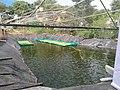 Azolla Bed on Water sarface(1).jpg