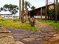 BR 153 GO - Restaurante Clima de Fazenda - panoramio.jpg