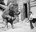 Bain-Collection-at-the-LoC The-Elephant-Hattie-and-Bill-Snyder ca-1913.jpg