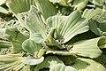 Bambouseraie de Prafrance 20100904 097.jpg