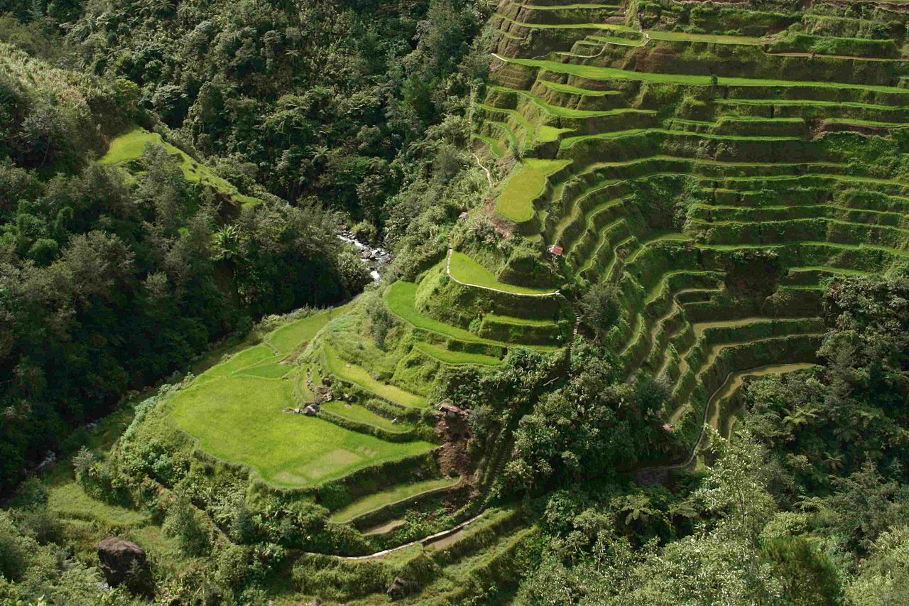 File banaue rice terrace close up 2 jpg wikimedia commons for Terrace terrace