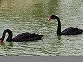 Bangabandhu Sheikh Mujib Safari Park 30.jpg