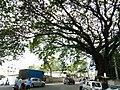 Bangalore Sanjay nagar street trees 8.jpg