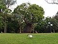 Baobab and Ibis - 2013.04 - panoramio.jpg