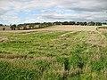 Barley field, Old Burnshot - geograph.org.uk - 1473783.jpg