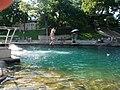 Barton Springs Pool - panoramio.jpg