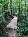 Battle Creek Cypress Swamp 13.jpg