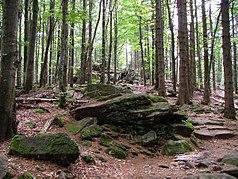 Typische Landschaft für den Nationalpark Bayerischer Wald: felsiger Granituntergrund und Mischwaldbestand aus überwiegend Fichten und Buchen
