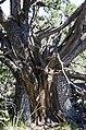 Bear Mountain, Sedona, Arizona - panoramio (15).jpg