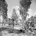 Bedoeïenen met hun kamelen temidden van resten van oorlogshandelingen in de Nege, Bestanddeelnr 255-0764.jpg