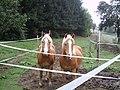 Beim Gattinger 2006 - panoramio.jpg