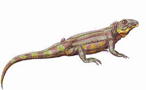 Bolosauridae - Life restoration of Belebey vegrandis